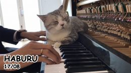 Brahms-Lullaby-for-Meow-Lunch-Dream-of-Haburu